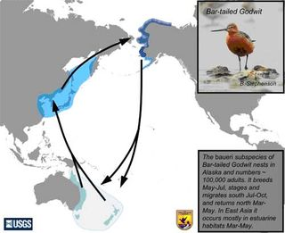 Bar-Tailed-Godwit-Map