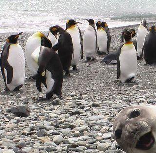 Sealbomber
